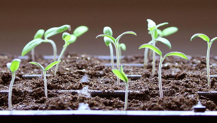 9th Street Fresh Planting Day Announced